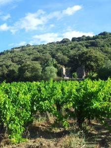 nos vignes printanières