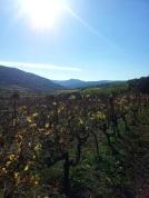la jolie vallée de Cabrières